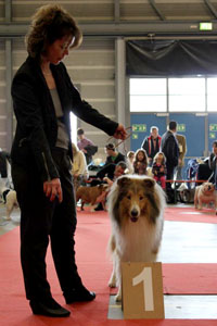 Joker From Lakeland of YVEN-Collies