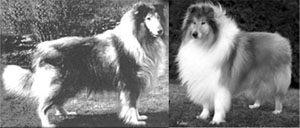 Crufts Winners 1968/2012: Ch. Royal Ace of Rokeby (1965) / Ch Jopium Touch of Soul for Triburle (2006)
